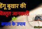 डेंगू बुखार की विस्तृत जानकारी और बचाव के उपाय | Dengue Fever & Home Treatment in Hindi