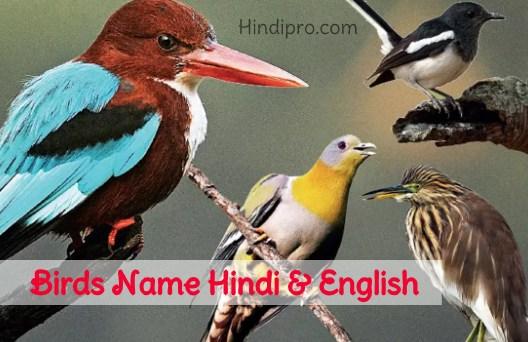 Birds Name In Hindi And English पक ष य क न म ह द म Hindipro
